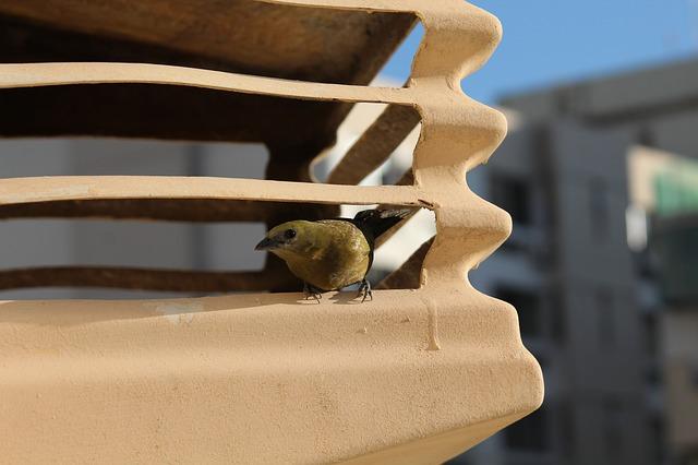 pták na  klimatizaci